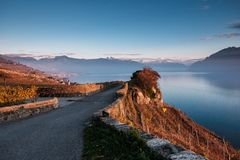 Sunset on the terraces of Lavaux, Switzerland, with a beautiful royalty free stock photo