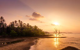 Sunset on th beach. With die tree Stock Photography