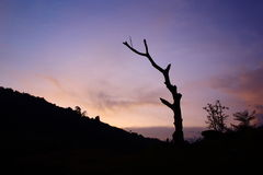 Sunset Beside th Moutaibn. Deaht tree was stand alone at any period Royalty Free Stock Photos