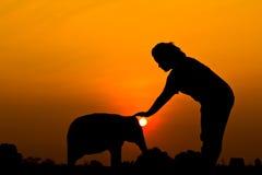 Elephant and sunset Royalty Free Stock Photo