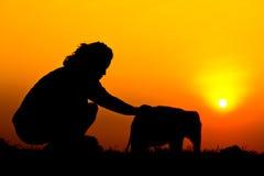 Elephant and sunset Stock Photo