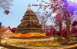 Sunset thailand garden and beautiful tree.Traditional architectu Stock Image