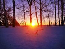Sunset at Thank birches Royalty Free Stock Photography
