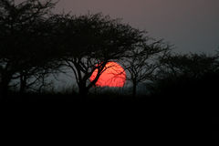 Sunset through Thorn Trees in Africa. Big Red Sunset through Thorn Trees in South African Game Reserve (Tala Royalty Free Stock Image