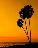 Sunset with three palmtree Royalty Free Stock Images