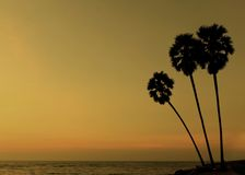 Sunset with three palmtree. Silhouette royalty free stock image