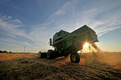 Sunset threshing Royalty Free Stock Photo