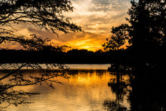 Free Sunset Through Bald Cypress Trees At Stumpy Lake Stock Image - 82603921
