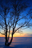 Sunset Through Leafless Trees In Winter Royalty Free Stock Photo