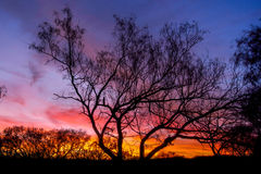 Sunset thru silhouette trees. Colorful sunset with pasture trees silhouette in forground stock photos