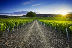 Sunset time over vineyards of Frontenas village, Beaujolais, Fra Stock Photos