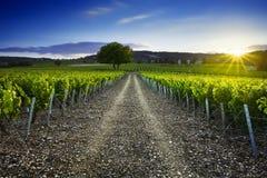 Sunset time over vineyards of Frontenas village, Beaujolais, Fra Stock Photos