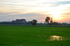 Sunset time with rice fields at countryside in Nonthaburi Thailand Royalty Free Stock Images
