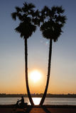 Sunset time with two palms. On the river Royalty Free Stock Images