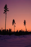Sunset time in the winter forest. Sunset in the winter forest royalty free stock images