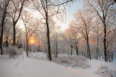 Sunset in Toila-Oru park. Stock Photo