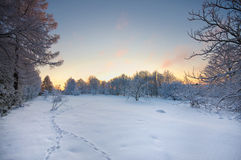 Sunset in Toila-Oru park. Stock Image