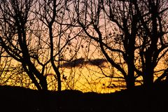 Sunset from the top of a city building through trees royalty free stock photos
