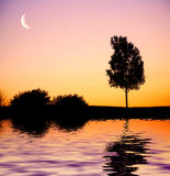 Sunset tree. Silhouette of a lonely tree by the lake with sunset skies in the background Stock Image