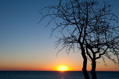 Sunset and tree Stock Images