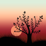 Sunset and tree Stock Photography
