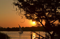 Sunset through a tree. On a river bank with a sailing felluca Royalty Free Stock Images