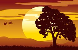 Sunset tree. Alone oak tree and red cloudy sunset Stock Images
