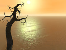 Sunset Tree Royalty Free Stock Image