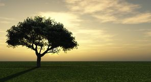 Sunset tree Royalty Free Stock Photos