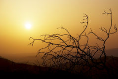 Sunset Tree Royalty Free Stock Images