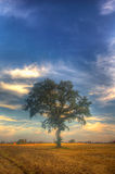 Sunset and tree Royalty Free Stock Image