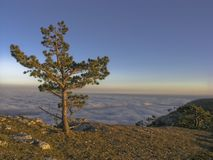 Sunset tree. Pine-tree under blue sky and sunset in mountains Stock Image