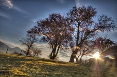 Sunset tree. Sanset landscape Royalty Free Stock Photography