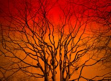 Sunset tree. Tree in the sunset with a bright orange background Royalty Free Stock Photo