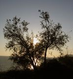 Sunset through the tree stock photos