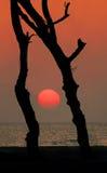 Sunset  tree. Dry tree and sunset near the ocean. Palolem beach. Goa Stock Photo
