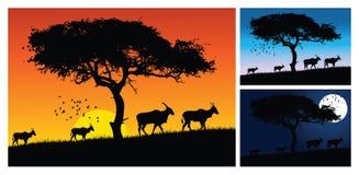Sunset tree. And wild animals Stock Photo