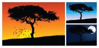 Sunset tree Stock Image