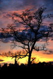 Sunset tree Royalty Free Stock Photo