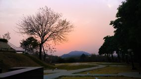 Sunset tree Royalty Free Stock Image