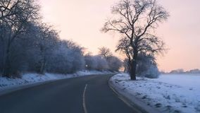 Sunset tree avenue road POV seen from car front seat. Drive stock video footage