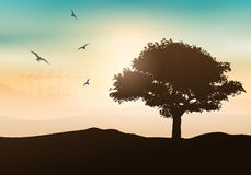 Sunset tree background Stock Photos