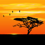 Sunset tree and birds silhouettes. Vector sunset tropical tree and birds silhouettes in desert stock photography