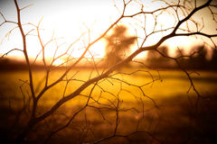 Sunset On Tree Braches Royalty Free Stock Images