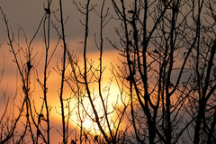A sunset through tree branches Royalty Free Stock Images