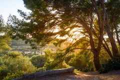 Sunset in the tree branches. Beautiful fields and hills of Porquerolles islnad stock photos