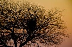 Sunset tree contour Royalty Free Stock Photos