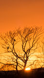 Sunset tree with crows - vertical Stock Photography