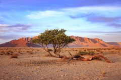 Sunset and tree in the desert Stock Photos