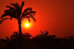Sunset. And tree in Egyptian countryside Royalty Free Stock Photos